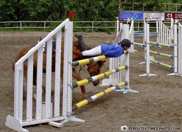 - Horse: Gonna make it, gonna make it, gonna make it