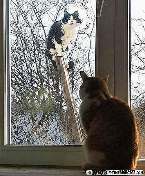Images insolites - Page 3 Cats-perfect-timing-animal-photos-09