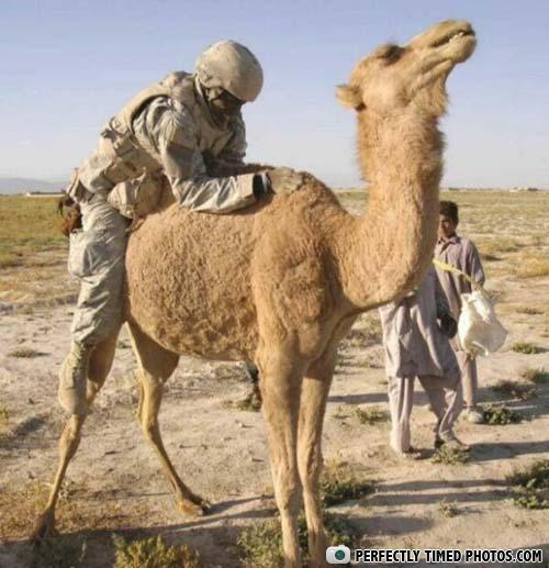 - that camel looks like its having fun