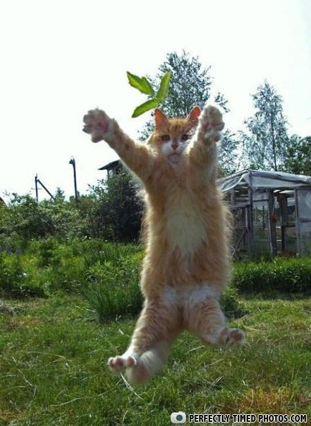 - Telekinesis!!! Must... contole... the... leaf...
