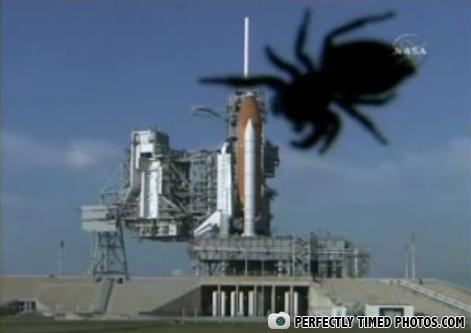 - In Soviet Russia, Spider eat rocket