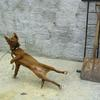 Doggy-breakdance