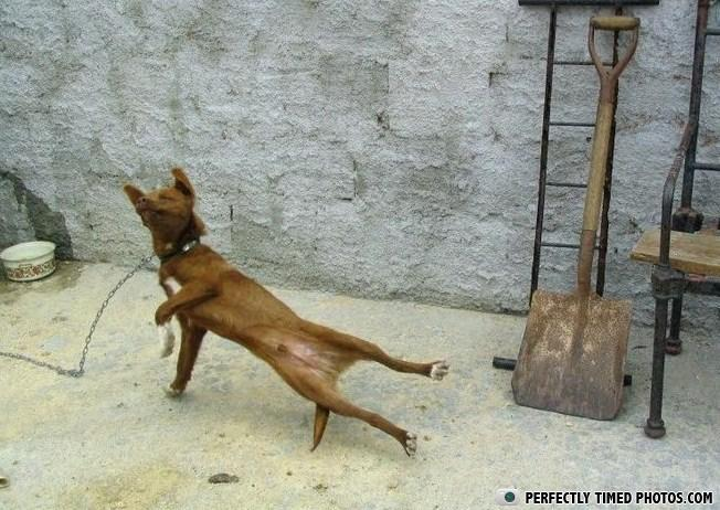 - lol, breakdance dog