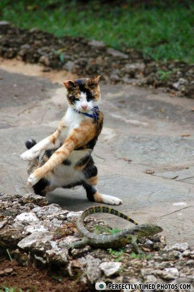 - Sir, you are in my Tai Chi area... please move you