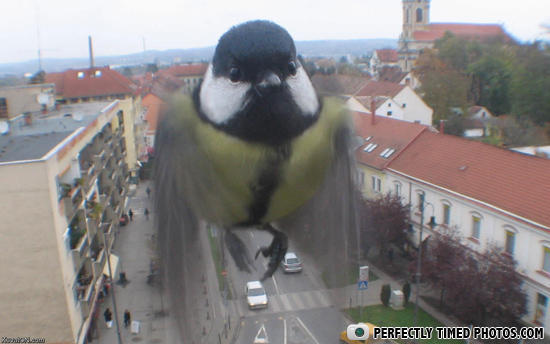 - first news... mutant birds attack city!!!