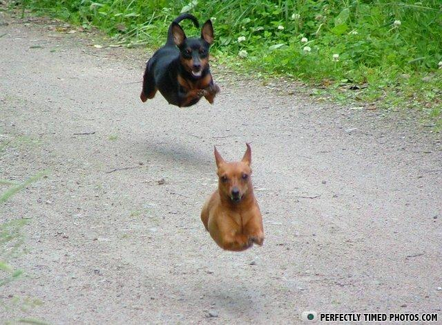 - Revenge of the hover dogs, THEY'RE BACK