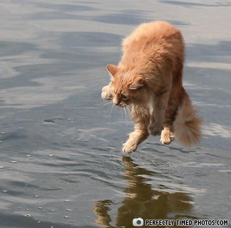 - Jesus walks on water, cats dances over it. WHERE I