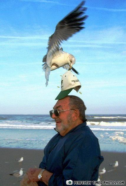 - Weight watcher seagull: ur doin it wrong! (lol my