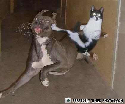 - every buddy was kongfu  fighting those cats were f
